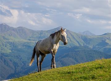 Tuşeti'de Atlar